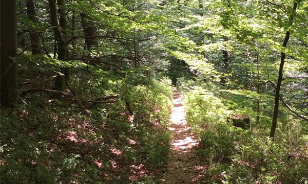 dreilaender-tour-trail