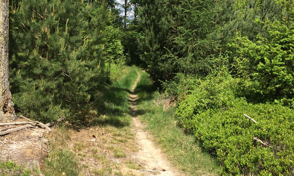 wisent-tour-trail
